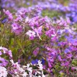 Какие цветы посадить на кладбище: лучшие советы по оформлению могил