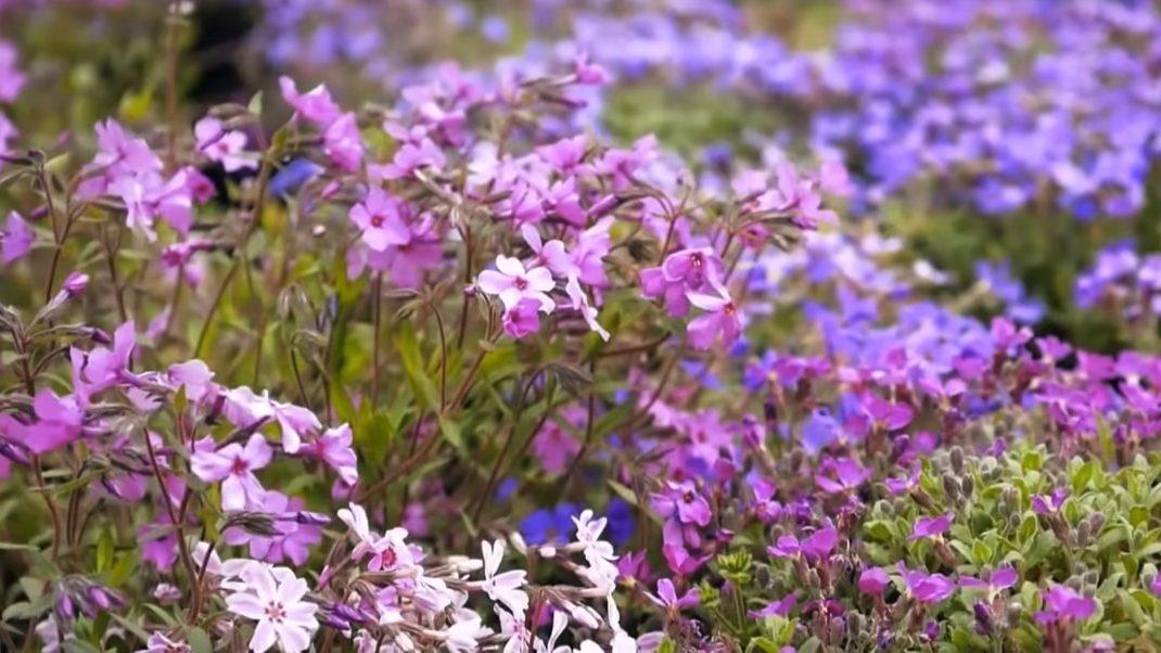 Какие цветы посадить на кладбище